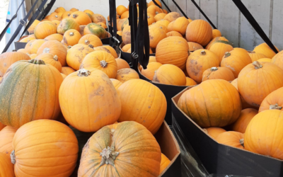 C&D SOUTH WEST EXECUTE HALLOWEEN HAULAGE
